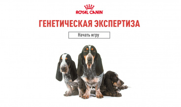 Genetic expertise. Royal canin.